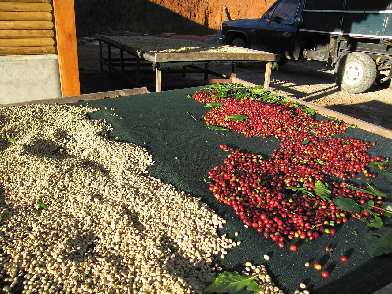 1280px-Coffee-cherries-green-coffee-tarrazu-costa-rica